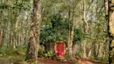 Rent Winnie the Pooh's Home in the Original Hundred Acre Wood on Airbnb!
