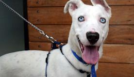 Dogs looking for home this Christmas as part of Battersea Dogs and Cats appeal
