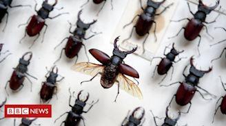 Museum's insect displays get £1.3m revamp