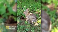 Cute baby bunnies have a morning meal