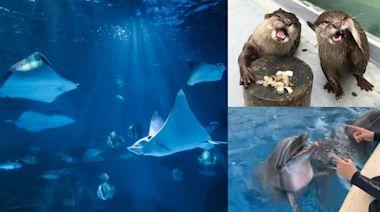 端午不出門!遠雄海洋公園推「線上樂園」登場,海獅、海豚、水獺擔當主播