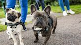 20 Dog breeds prone to being overweight and how to avoid it