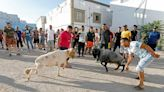 Tunisians on the margins find escape in ram fighting