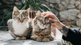 馬來西亞給我的「貓奴」文化衝擊!──從受虐貓茶茶案,反思杜絕虐待動物的關鍵是什麼?|外派太太/外派太太的漂流札記|換日線