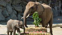 Austrian minister thanks elephant that aided virus guidance