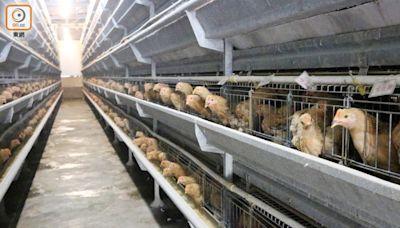 越南廣治省爆高致病性H5N8禽流感 疫區禽產品禁輸港