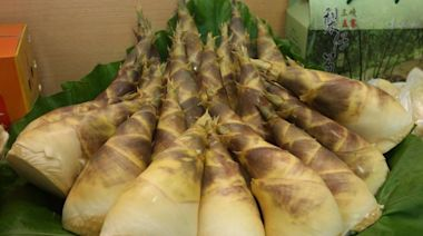 綠竹筍產季開始!新北推線上買宅配到府