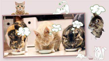 9成貓用濕糧礦物質或氨基酸含量未符國際指引 錯誤餵飼副食罐可致營養不足 甚或引致嚴重疾病 | 消費者委員會