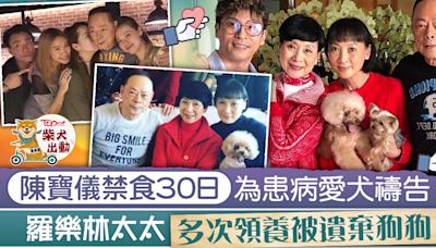 【開心速遞】羅樂林太太多次領養棄犬 陳寶儀為重病毛孩禁食30天:盡力守護牠 - 香港經濟日報 - TOPick - 娛樂