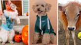 24 Low-Maintenance Pet Costumes Your Fur Baby *Might* Not Hate