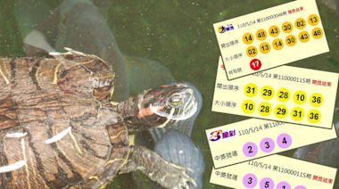 5/14 大樂透、今彩539、雙贏彩 頭獎均摃龜