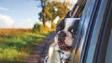 10 best dog-friendly cars, according to CarGurus