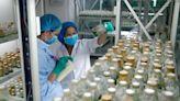 【專家點評】富蘭克林鄧普頓:醫療業可塑度高前景佳