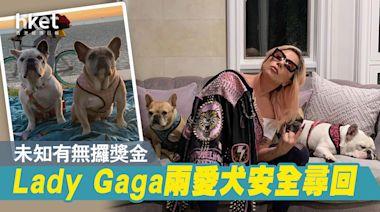 【Lady Gaga】兩愛犬安全尋回 未知有無攞獎金 - 香港經濟日報 - 即時新聞頻道 - 國際形勢 - 環球社會熱點