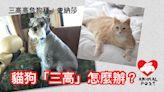 【醫療專題】貓狗會否有「三高」? 毛孩有三高怎麼辦?