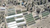 Illegal marijuana farms take West's scarce water