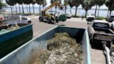 With Tampa Bay in grip of the Red Tide, shrimpers have a new mission: clean up the dead fish