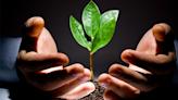 碳權報價1年飆135%、僅次於木材!碳ETF大吸金