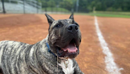 Ethan the Rescue Dog to 'Throw' First Pitch at Louisville Baseball Game After Stunning Recovery