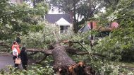 Maryland Homes Evacuated After Downed Tree Hits Power Lines Following Night of Storms