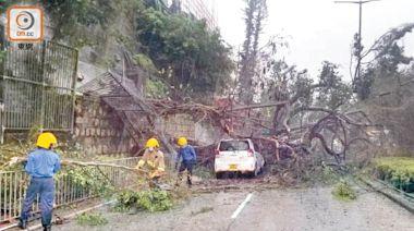 多區冧樹 毀屋 砸車 阻路 東方早獻藍圖 保障市民安全 - 東方日報