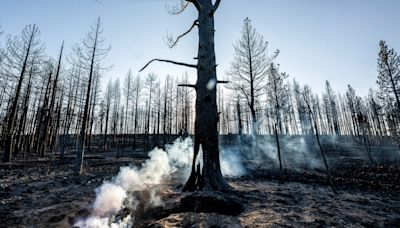 Tamarack Fire spreads to Nevada; Western wildfires lead to poor air quality across the US
