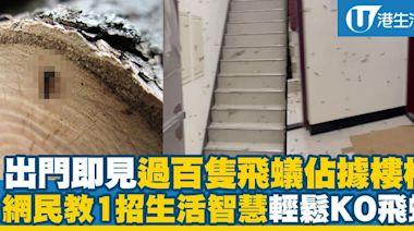 出門即見過百隻飛蟻佔據樓梯阻返工 網民教路1招生活智慧輕鬆KO飛蟻   港生活 - 尋找香港好去處