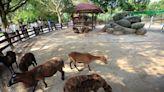 【嘉義景點】獨角仙休閒農場:適合親子旅遊,超大遊戲空間和小小動物園,還可以餵草泥馬 - SayDigi | 點子生活
