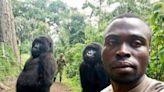 剛果網紅大猩猩過世 保育員懷中安詳地走