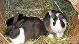 獸醫監修!推薦十大兔子用牧草人氣排行榜【2021年最新版】