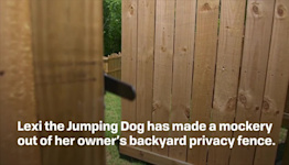 Watch This Incredible Jumping Dog Scale Her Huge Backyard Fence Like It's Nothing in Amazi