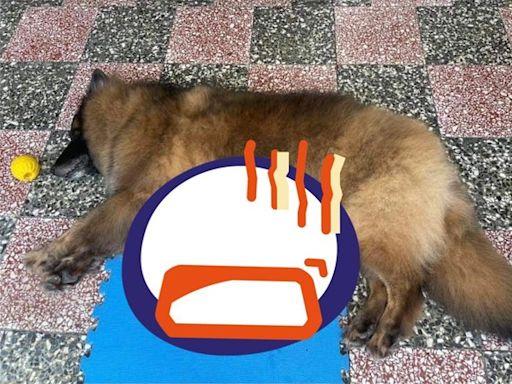 「奶狗有人要嗎?」5小狼鑽肚搶喝奶 網搶認養下秒尬爆:被騙了
