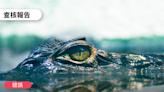【錯誤】網傳影片:「鄭州水災出現鱷魚咬人」?