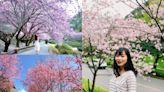 全台五大熱門賞櫻景點行程推薦!武陵櫻花季、阿里山鐵路賞櫻 二日遊最低 2000 有找--上報
