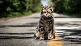 Pet Sematary director says cats who played Church were a 'pack of divas' on set