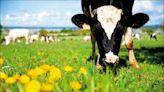 中英對照讀新聞》Scientists are potty-training cows in a bid to help save the planet為拯救地球科學家訓練乳牛如廁