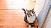 家有孕婦不能養貓?貓專科醫師揭誤會