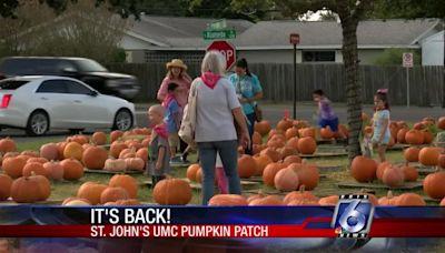 St. John's pumpkin patch is back!