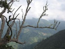 Blue Mountains (Jamaica)