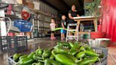 Chile Harvest Starts Early for Some New Mexico Farmers   Arizona News   US News