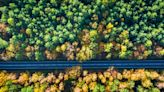 Governments are 'hiding behind' tree-planting and unproven carbon removal instead of cutting fossil fuels