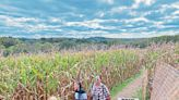 Gearhard Farms cornfield maze stands the test of time