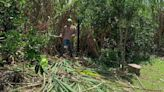 How an Indigenous Tribe Is Preserving Ancestral Lands by Cultivating Heritage Sugar