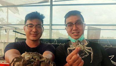 疫情延誤養殖期 台南青農再接再厲挑戰試養大閘蟹