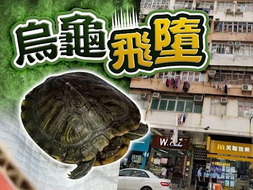 新蒲崗天降烏龜 警展開調查