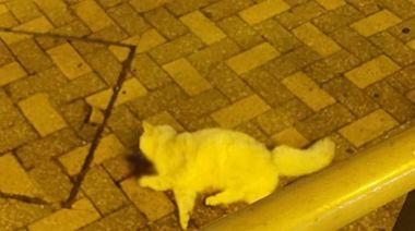 貓咪秀茂坪邨墮樓亡 警登樓調查