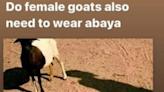 口味這麼重? 巴國5男子竟輪姦殺害山羊 主人憤怒報案 警方追捕   國際   新頭殼 Newtalk