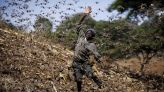 Poor rains bring optimism African locust outbreak will fade