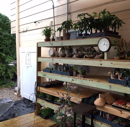 Elemental Nursery Kissimmee Yahoo Local Search Results