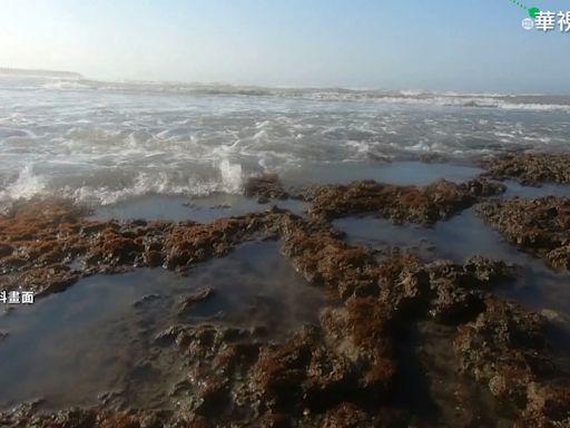大潭離岸5公里都藻礁? 經部: 在2公里內